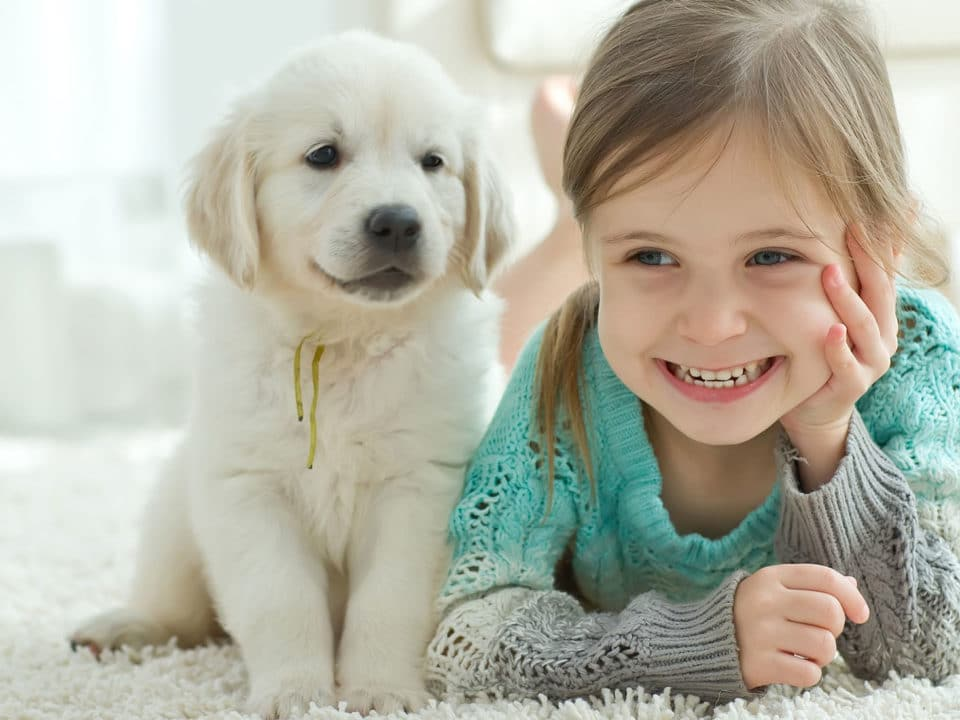 Dog Breeds That Will Help You Keep A Clean House Zerorez